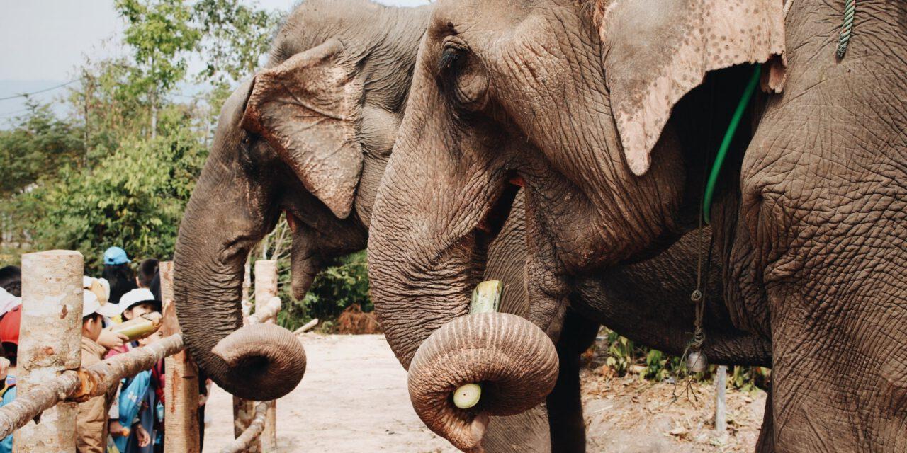 Heiraten im Duisburger Zoo